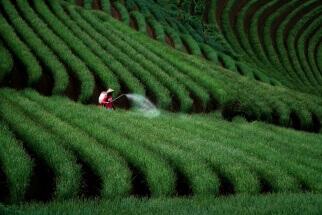 Argapura Farmer by Ricky Babeh: fb/RickyBasukiMaulana