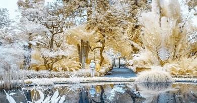 Botanical Garden de Tenerife by Stefan Zimmermann