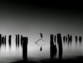 By Karim Bouchareb (Untitled): Morning run by Karim Bouchareb: https://www.facebook.com/vitch.karim