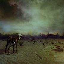 Goat Universe by Rezki Sterneanto