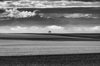 Just one tree by Frédéric Ducos: © www.fredericducos.com