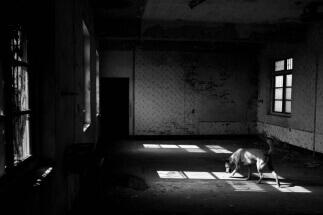Light through abandoned House by Wei-Chen Li: fb/100000173588432