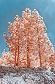 Magical Trees by Stefan Zimmermann