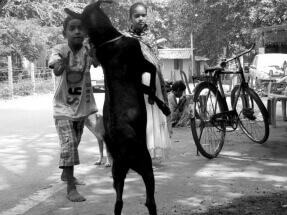 Play mate by Shankar Dasgupta: fb/shankar.dasgupta1