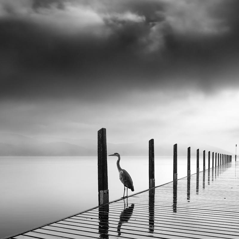 Rain Bird by George Digalakis 2018