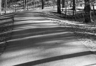 Shadowed Path by Lane Billings: lanebillingsphotography.com