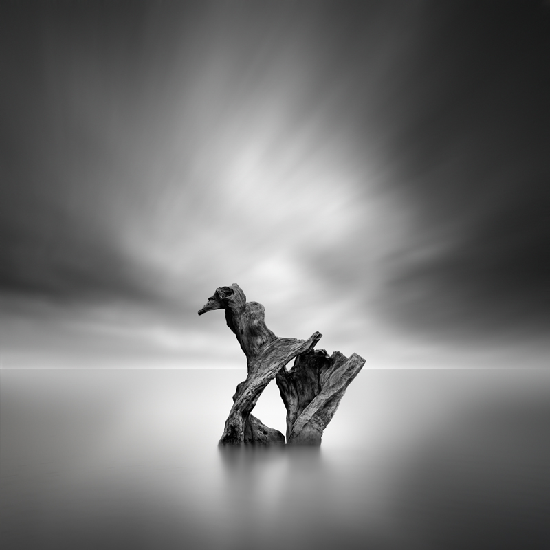 The Bird by George Digalakis 2018