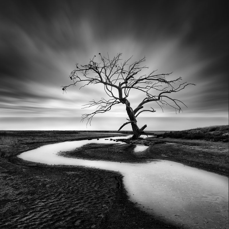 The Crying Tree by George Digalakis 2018
