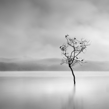 Winter Birds by George Digalakis 2018