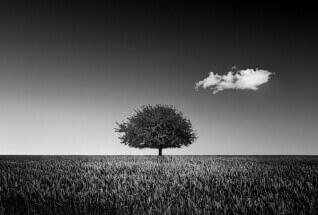 Inspired tree by Karim Bouchareb: fb/vitch.karim