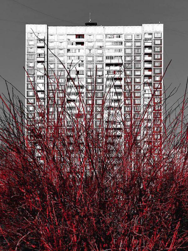 Leonid Ponomarenko, TAGREE, Photography