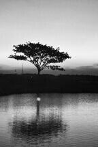 Tree alone by Diana (Dee): fb/diana230179
