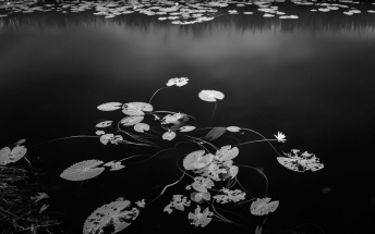 Lee Chee Wai, TAGREE, Photography, Fineartphotography