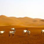 Endless vastness,and the glowing heat by Sadiq AlQatari