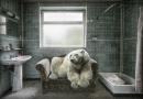 Animals in lost places by Marcel van Balken