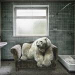 Animals in lost places by Marcel van Balken