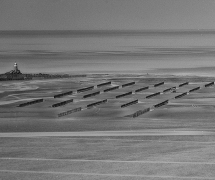 Plantation de mer by Thierry Lair