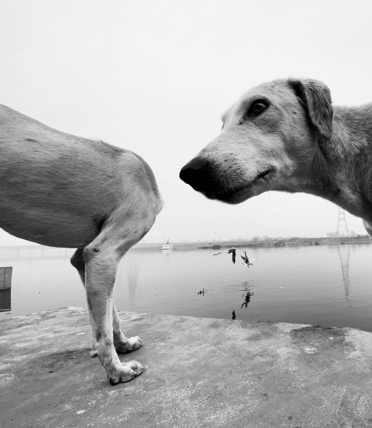 STREETS: URBAN ANIMAL by DIMPY BHALOTIA (INDIA) HONORABLE MENTION